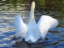 Étirez ces ailes Photographie stock libre de droits