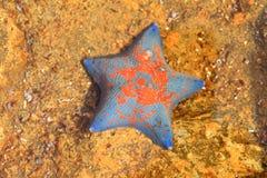 Étoile bleue de batte Image stock