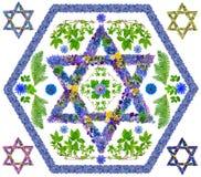 Étoile d'isolement florale de David Images libres de droits