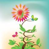 étoile de fleurs Images libres de droits