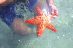 Étoile de mer Images stock