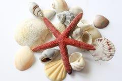 Étoile de mer Images libres de droits
