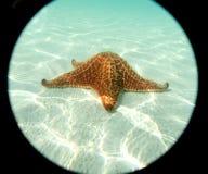 Étoile de mer au bas de sable de la mer fine Photo libre de droits