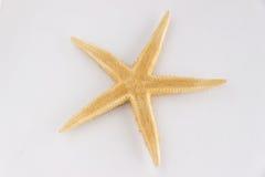 Étoile de mer d'isolement Images libres de droits