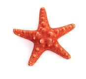 Étoile de mer d'isolement sur le blanc Photo stock