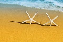Étoile de mer deux ou étoiles de mer sur arénacé d'or sur le fond de mer Photo libre de droits
