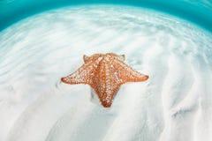 Étoile de mer rouge de coussin sur le sable photo libre de droits