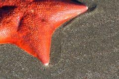 Étoile de mer sur le fond de sable Photos libres de droits