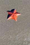 Étoile de mer sur le fond de sable Photos stock