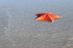 Étoile de mer sur le fond de sable Images libres de droits