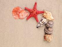 Étoile et coquilles de mer sur le sable images stock