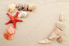 Étoile et coquilles de mer sur le sable. images libres de droits