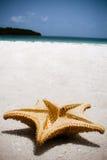 Étoile sur la plage Image libre de droits