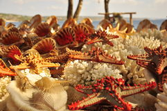 étoiles, coquilles et escargots d'espèce marine Images libres de droits