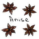 Étoiles d'anis Illustration de vecteur d'isolement sur un fond blanc Croquis tiré par la main réaliste de style de griffonnage Images stock
