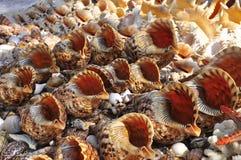 Étoiles d'espèce marine, coquilles et collection d'escargots à la plage Image stock