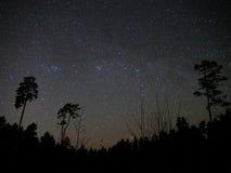 Étoiles de ciel nocturne et atmosphère de forêt photos stock