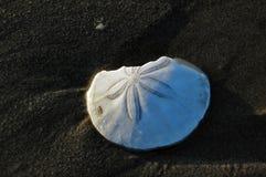 Étoiles de mer, échinoderme, sur la plage Photo stock