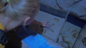 Étoiles de mer émouvantes de femme dans l'oceanarium banque de vidéos