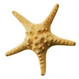 Étoiles de mer photo stock