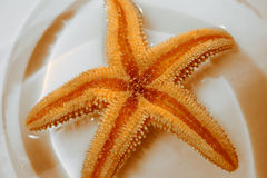 Étoiles de mer Images libres de droits
