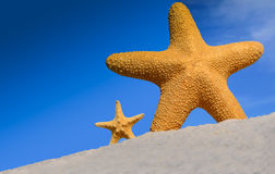 Étoiles de mer Image libre de droits