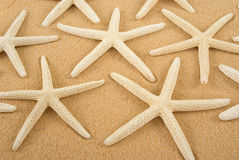 Étoiles de mer Photographie stock libre de droits