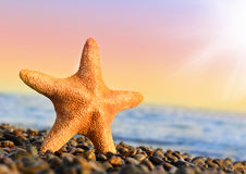 Étoiles de mer Photo libre de droits