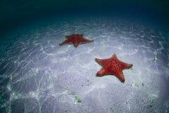 Étoiles de mer Image stock
