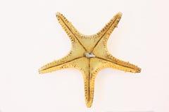 Étoiles de mer avec la coquille Photos stock