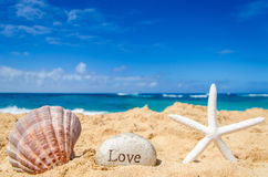 Étoiles de mer avec le coquillage sur la plage sablonneuse Image libre de droits