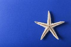 Étoiles de mer avec le fond bleu Image libre de droits