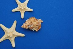 Étoiles de mer avec Shell sur un fond bleu avec l'espace de copie Nautique, concept de Marrine photographie stock