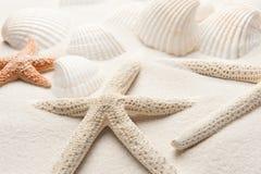 Étoiles de mer blanches photographie stock libre de droits