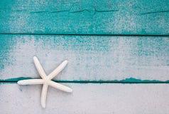 Étoiles de mer blanches sur le signe en bois bleu de sarcelle d'hiver arénacée Image libre de droits