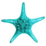 Étoiles de mer bleues Photos libres de droits