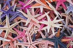 Étoiles de mer colorées d'étoiles de mer/souvenir Images libres de droits