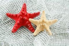 Étoiles de mer colorées sur un filet de pêche Photographie stock libre de droits