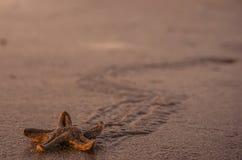 Étoiles de mer courantes photographie stock libre de droits