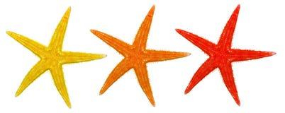 Étoiles de mer d'été images libres de droits