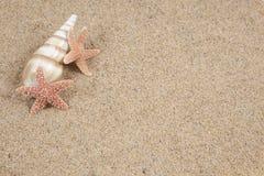 Étoiles de mer dans le sable de plage - copie image stock
