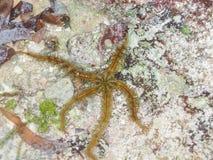 Étoiles de mer dans Watamu images stock