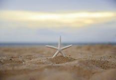 Étoiles de mer de plan rapproché sur le coucher du soleil de plage et de crépuscule Photographie stock libre de droits