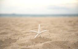 Étoiles de mer de plan rapproché sur le coucher du soleil de plage et de crépuscule Photos libres de droits