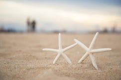 Étoiles de mer de plan rapproché sur le coucher du soleil de plage et de crépuscule Photos stock
