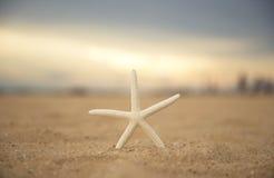 Étoiles de mer de plan rapproché sur le coucher du soleil de plage et de crépuscule Photo stock