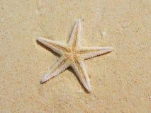 étoiles de mer de sable photographie stock