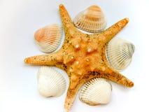 étoiles de mer de seashells Photo stock