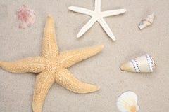 étoiles de mer de seashells image stock