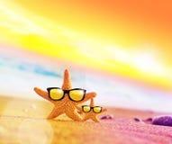 Étoiles de mer drôles avec des sunglass sur la plage sablonneuse Images libres de droits